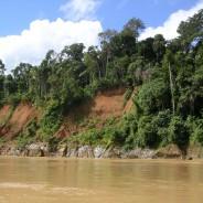 (Português) Área de mineração na Amazônia peruana cresceu 400%